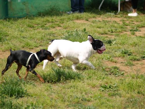 dog_run3.jpg