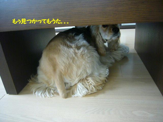 かくれんぼ2.jpg