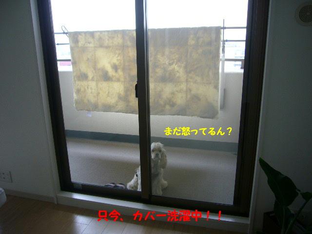 かくれんぼ2-3.jpg