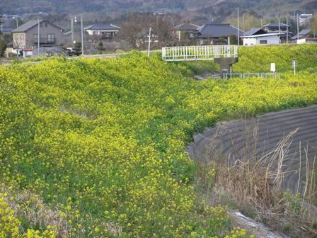 nahonana2007.jpg