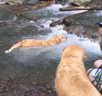泳ぎの特訓.jpg