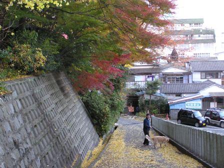 紅葉の散歩道.jpg