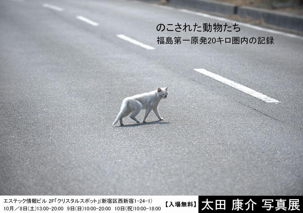 のこされた動物たち.jpg