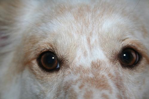 7.28モコの目