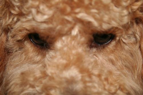 7.28ココアの目