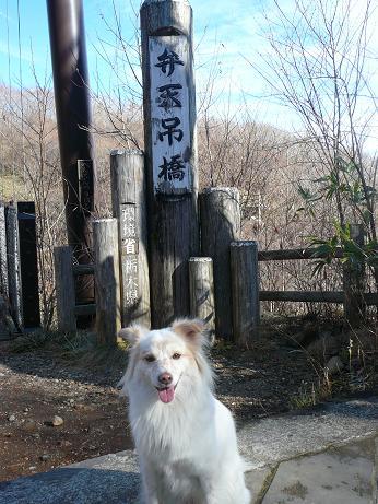 11.26弁天吊り橋の看板前