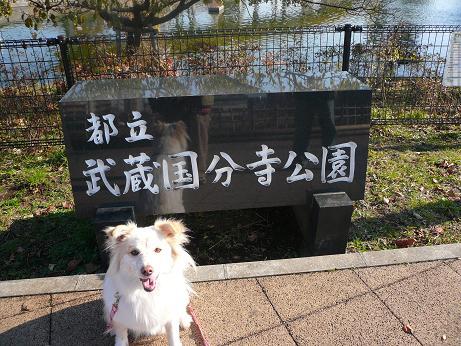 12.2国分寺公園