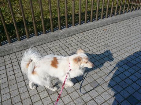 12.2お散歩2