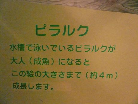 1.6箱根園水族館9