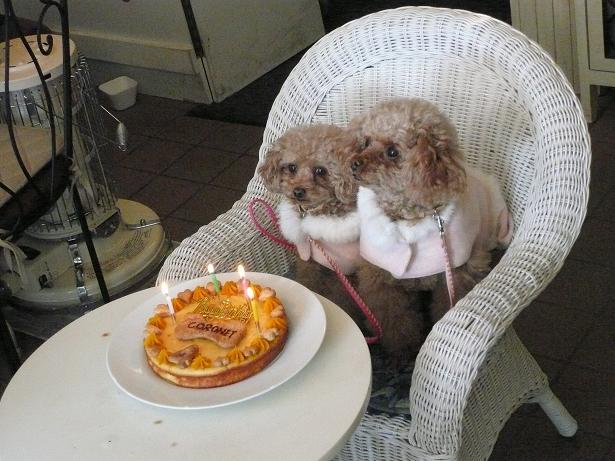 1.16ちゃぷころちゃんとケーキ2