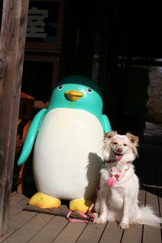 2.5ペンギンさんとモコ2