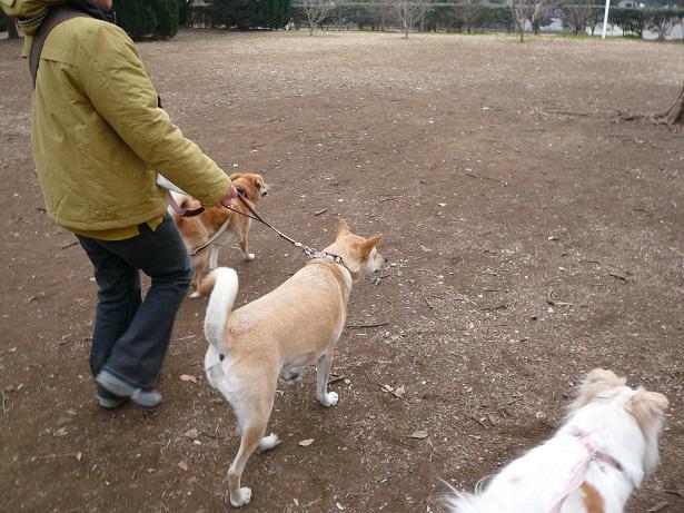 2.9駒沢公園
