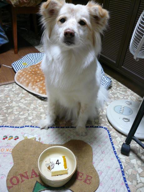2.17はい!ケーキ