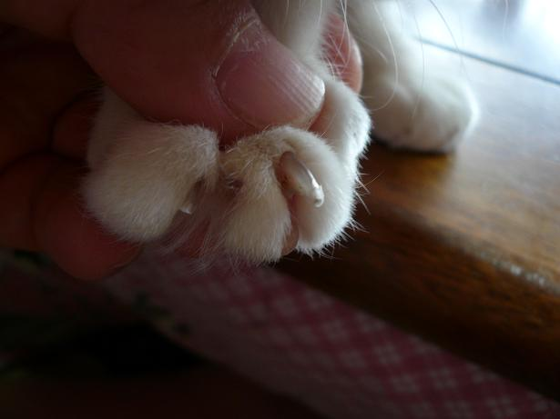 3.30とらちゃんの爪