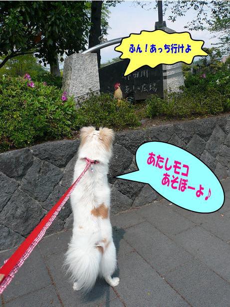4.29浅間大社のニワトリさん