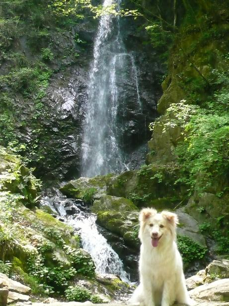 5.3滝とモコ1