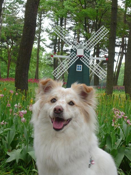 5.10風車とモコ