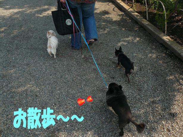 6.1お散歩1