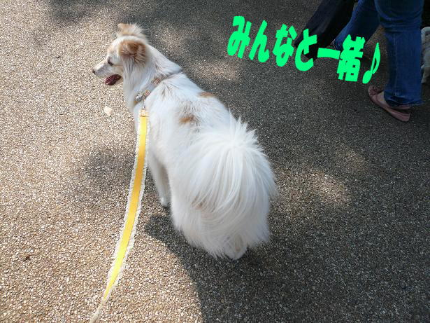 6.1お散歩2