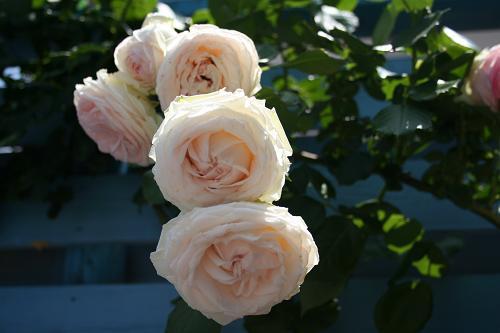 6.4すごい花びら