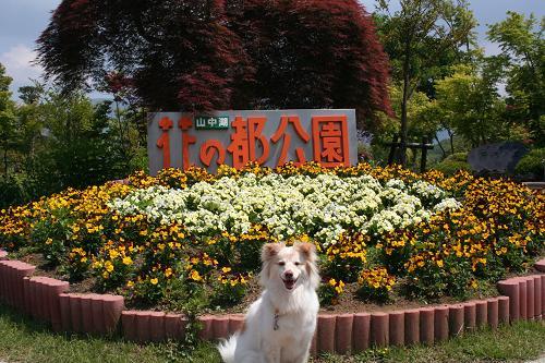 6.6花の都公園1