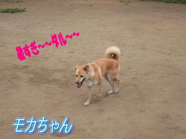 6.29モカちゃん1