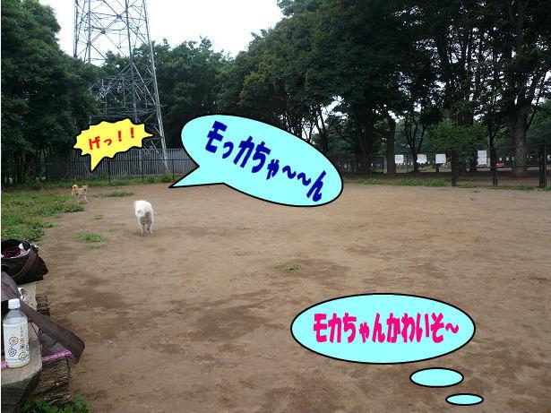 6.29モカちゃんが・・・