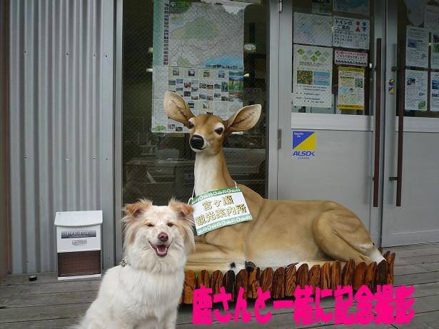 7.10鹿さんと