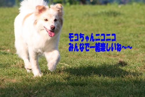 8.9モコちゃん楽しい〜