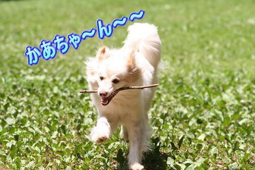 8.9かあちゃ〜ん〜