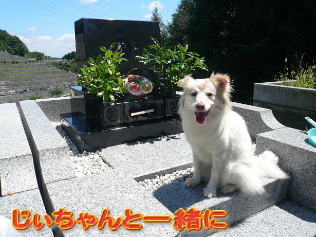 8.13じぃちゃんと一緒