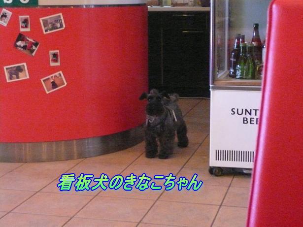8.14看板犬きなこちゃん