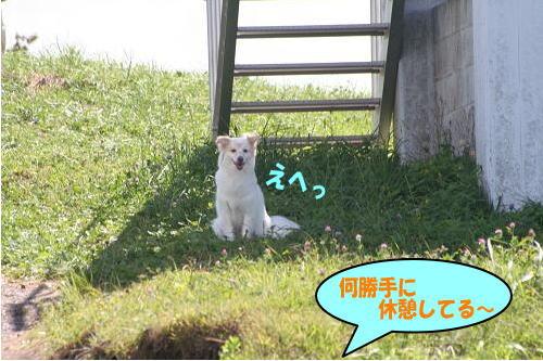 8.20日陰好き〜