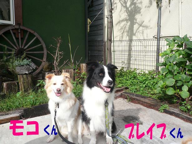 9.12モコ&ブレイブ