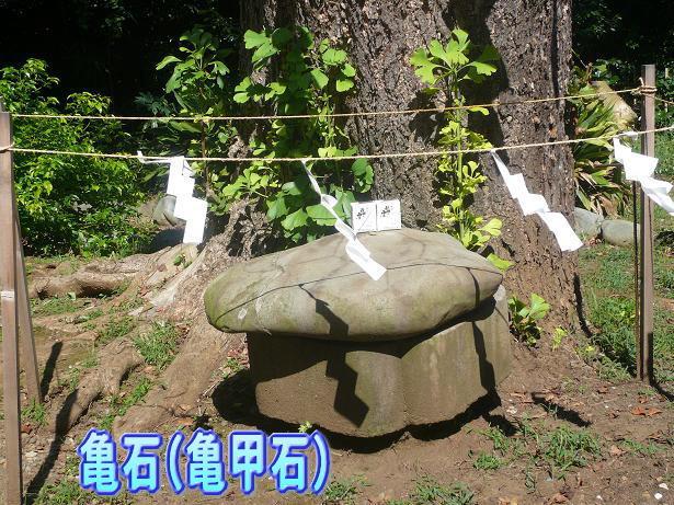 9.21亀石