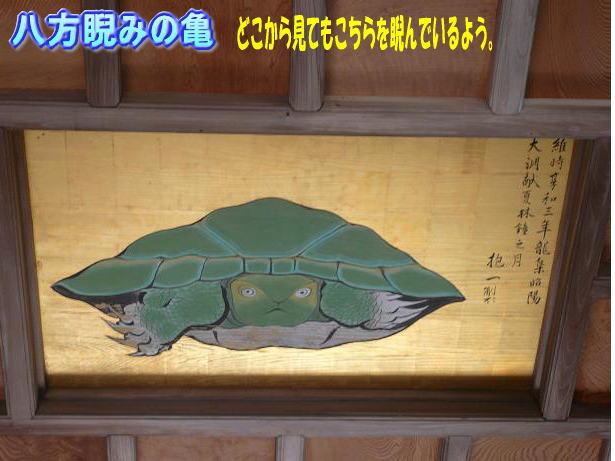 9.21八方睨みの亀