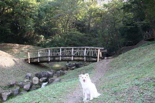 11.8木の橋