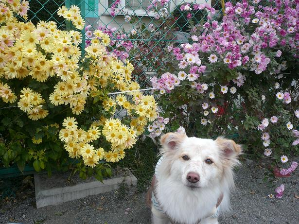 11.27お花とパチリ
