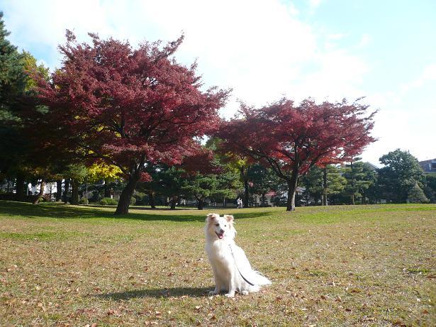 12.1野川公園1