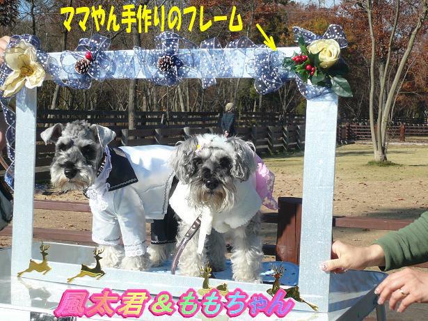 12.9風ちゃん・ももちゃん