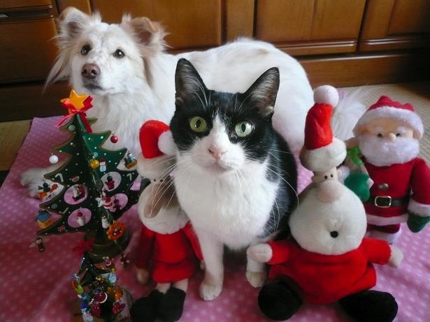 12.242007クリスマス4