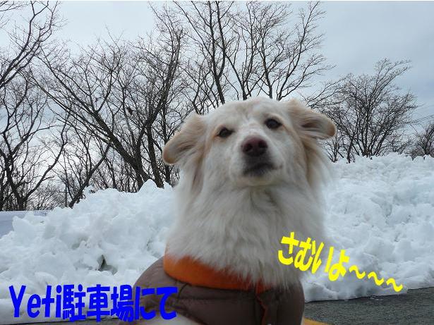 12.28雪が・・・