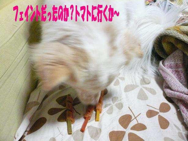 1.14いやトマトか〜