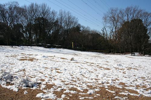 2.5残雪