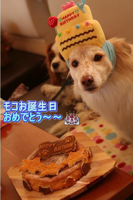 2.18モコおめでとう〜