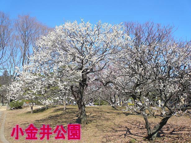 2.28小金井公園