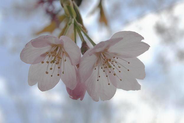 3.27桜5