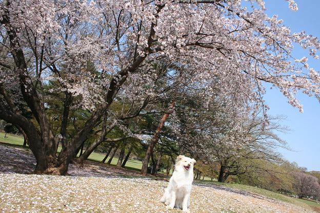 4.4野川公園