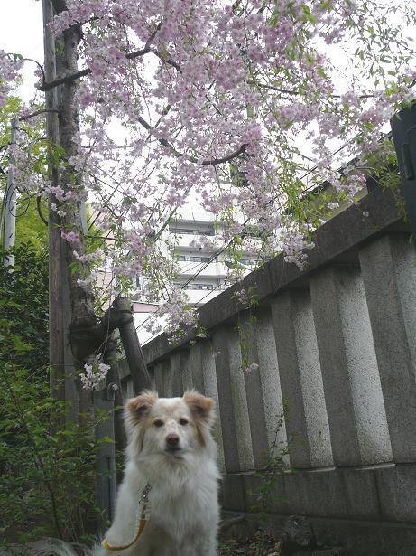 4.7大国魂神社