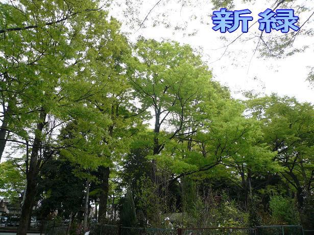 4.12大国魂神社